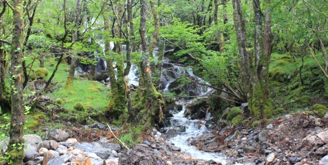 16 watefalls in woods, Ruth walking down Glen Arnisdale to Corran