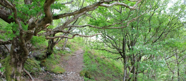 19 among the trees, Ruth walking along the shore of Loch Morar