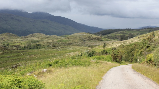 23 downhill through woodland, Ruth walking the Scottish coast from Arnisdale to Sandaig