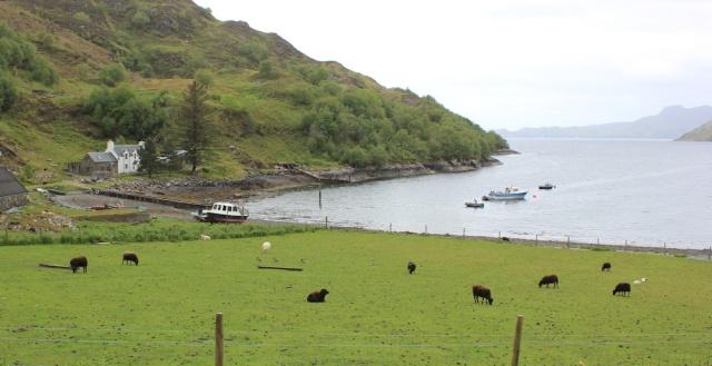 32 sheep and jetty, Ruth hiking around Scotland, Tarbet, Loch Nevis