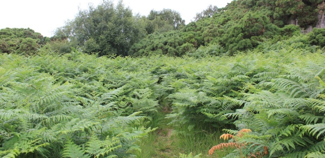 11 overgrown paths, The Plock, Ruth's coastal walk around the Highlands of Scotland