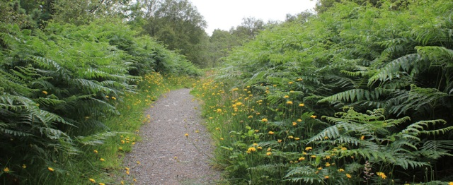 15 path with wildflowers, The Plock, Ruth's coastal walk around the Highlands of Scotland