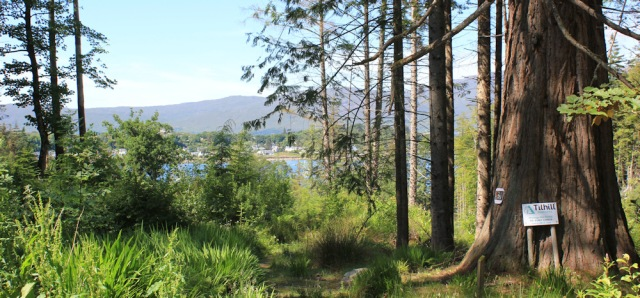 22 Plockton through trees from Duncraig, Ruth hiking round the coast of Scotland