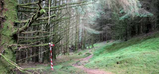 28 winding path through woods to Totaig, Ruth hiking in Scotland