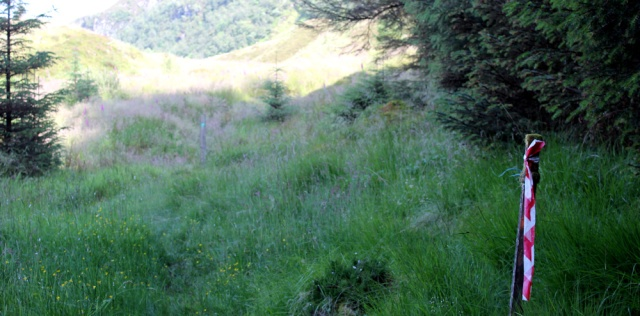 31 out of the woods, Ruth's coastal walk around Glenelg, Scotland, to Totaig