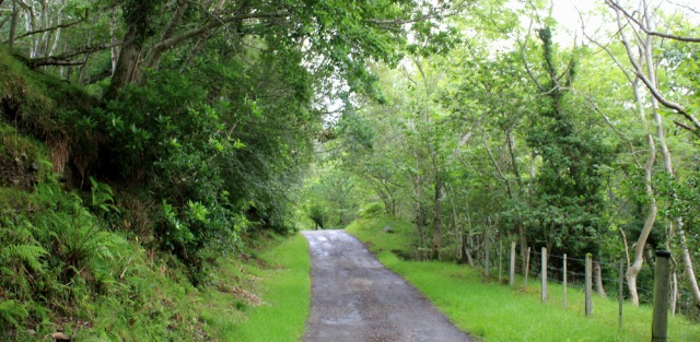 05 narrow road from Ardaneaskan, Loch Carron, Ruth's coastal walk around Scotland