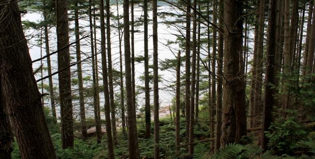 07 sloping woods, Loch Carron, Ruth's coastal walk around Scotland