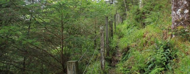 12 narrow path along edge of woodland, Reraig, Ruth walking the coast of Scotland