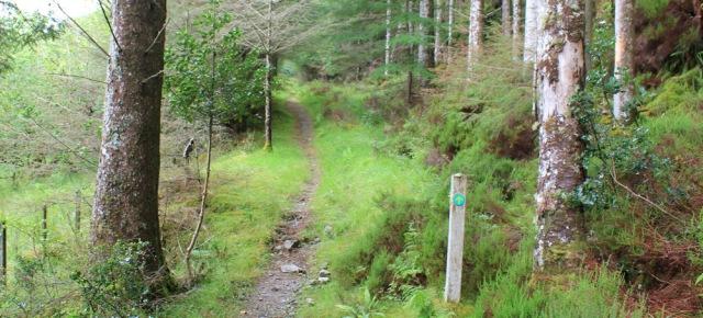 13 signed path through trees, Reraig, Ruth walking the coast of Scotland