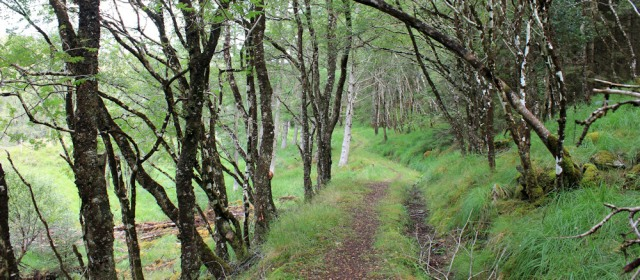 26 Woods and track, Ruth hiking around the coast, Scottish Highlands