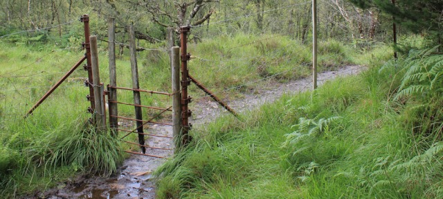 27 through a muddy gate, Reraig, Wester Ross, Ruth hiking around the coast, Scottish Highlands