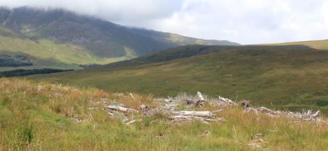 60 tree graveyard, Ruth hiking to Applecross, Scotland