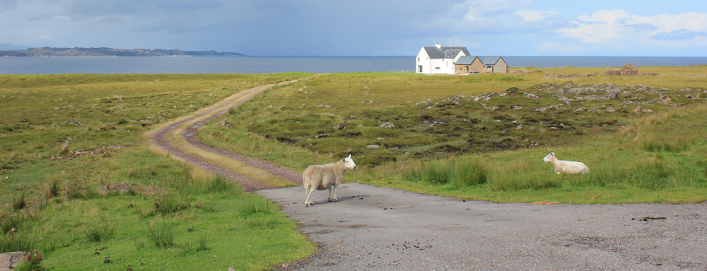 22 watching sheep, road to Cuaig, Ruth walking up the coast of Applecross, Scotland
