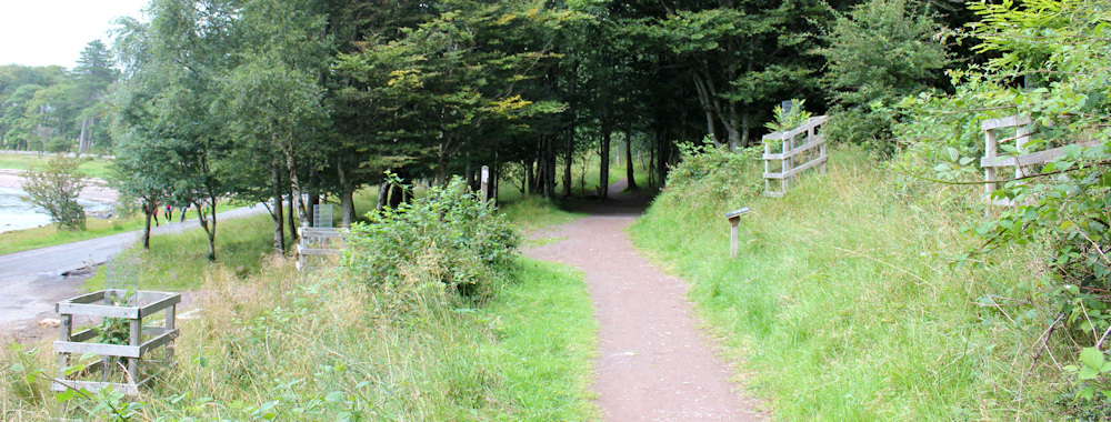 49 The 4 trees planted at Applecross, Ruth's coastal walk around Scotland