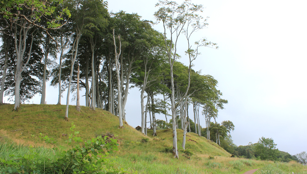50 Applecross trees, Ruth walking the coast of Scotland