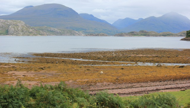24 Loch Torridon and sheep on the shore, Ruth walking the south bank of Loch Torridon, Scotland
