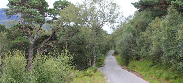 31 narrow road to Sheldaig, Ruth walking the south bank of Loch Torridon, Scotland