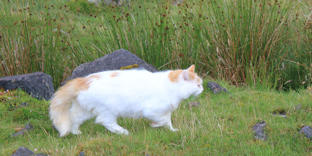 35 cat on the walk, Ruth hiking the north coast of Applecross, Scotland