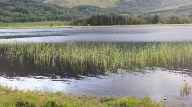 15 light on Loch Doire nam Mart, Ruth walking across the Morvern Peninsula, Scotland
