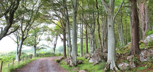 024 walking through trees on the Torridon Estate, Ruth's coastal walk around Scotland